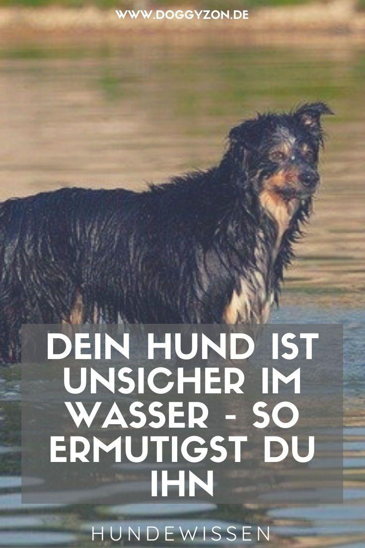Schwimmen Mit Hund So Gewohnst Du Deinen Hund Ans Baden In 2020 Hunde Hundegesundheit Hundchen Training
