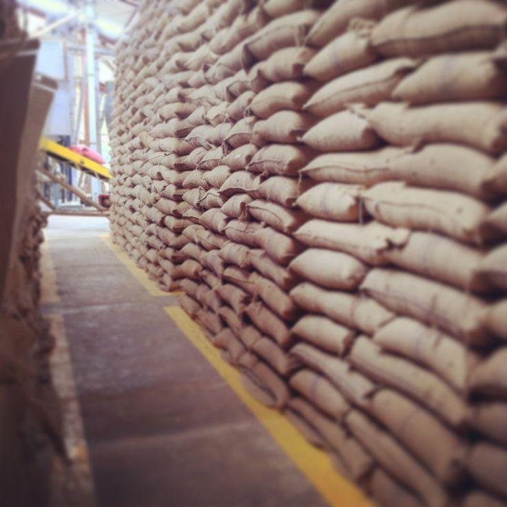 Aromático grano de café contenido en sacos de yute.