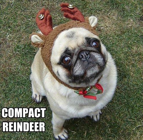 Funny Pug Dog Meme Pun LOL (Our Bailey Puggins playing ...