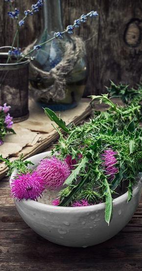 ostropestřec mariánský, olej, detoxikace, detox jater, zdravá játra, regenerace jater, přírodní medicína