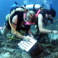 How to Select a Marine Biology Program