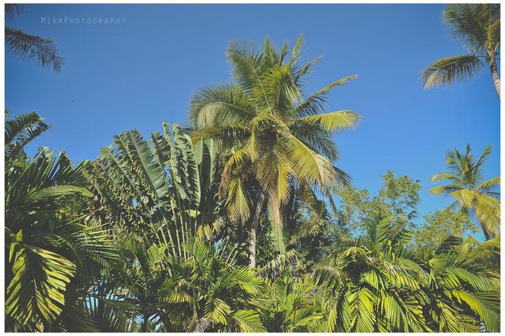 Caribeann Colours ... #greenlife #dominicanrepublic #alwayssummer #palmtrees #bluesky #happy #lovedominicanrepublic