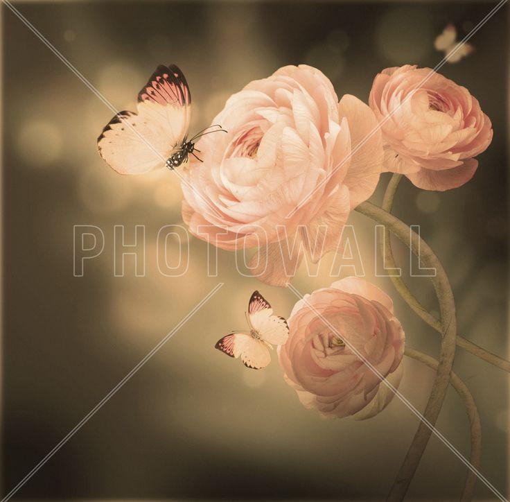 Apricot Kiss - Fototapeter & Tapeter - Photowall