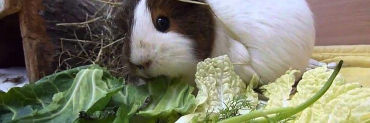 Planten kunnen niet enkel voelen dat ze op het punt staan gegeten te worden, ze zijn bovendien in staat om zich te verdedigen op deze ' aanval' door te reageren.Intelligentie bij plant