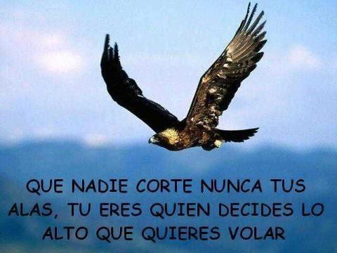 30 de Setiembre / Aguila Planetario Azul | Legado Maya