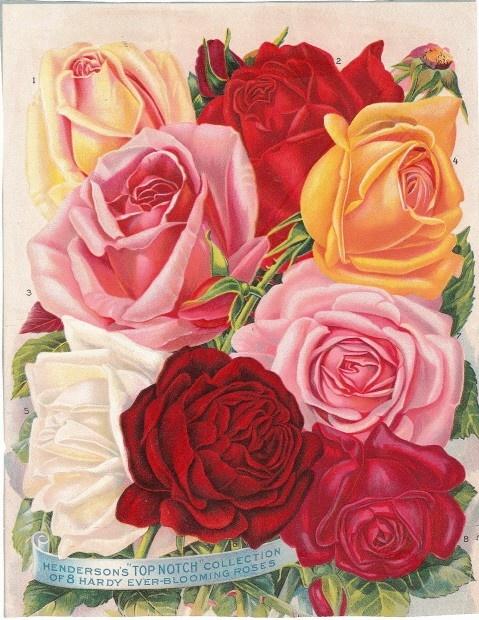 Victorian flower catalog