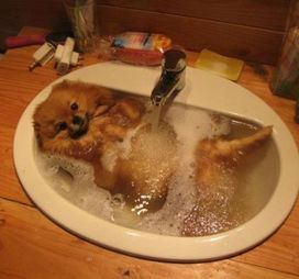 26 Painfully Cute Pictures of Puppies Taking A Bath   Playbuzz