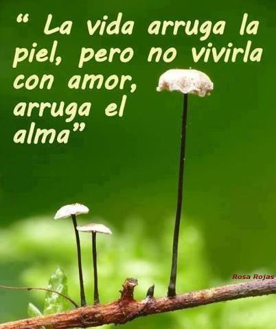 #frases, amor, vida, alma,