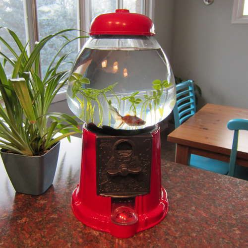 Gumball machine fish tank crafts... love this!!