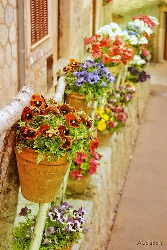 rows of pots  LOVE... but in Texas I'd be watering ALL day!  any ideas?