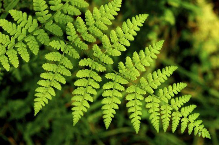 1000 ideas sobre jardines tropicales en pinterest for Tipos de plantas para jardin