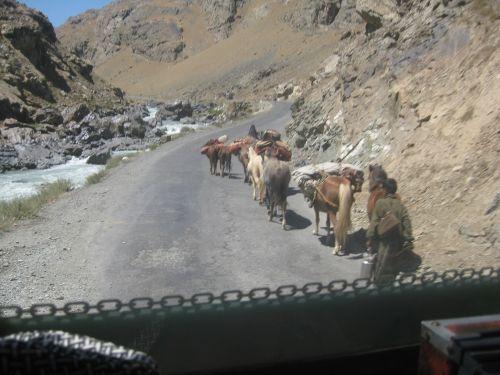 O gado disputa espaço na estrada que leva à Sonamarg, na Caxemira, região em disputa pela Índia e o Paquistão.