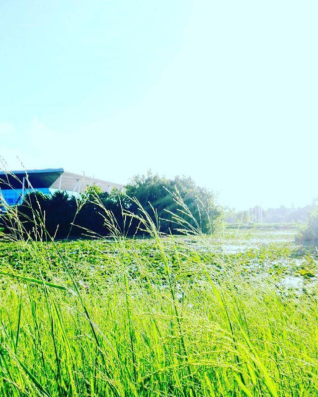 #vsco #vscocam #photooftheday #picoftheday #wanderlust #nomad #gopro #goprotravel #travel #travelblog #travelblogger #travelling #traveller #backpacking #instago #backpacker #sydney #australia #aussie #Ibiza #instagram #downunder #byron #byronbay #portstephens #travel #travelphotography #travelgram #Maldives....