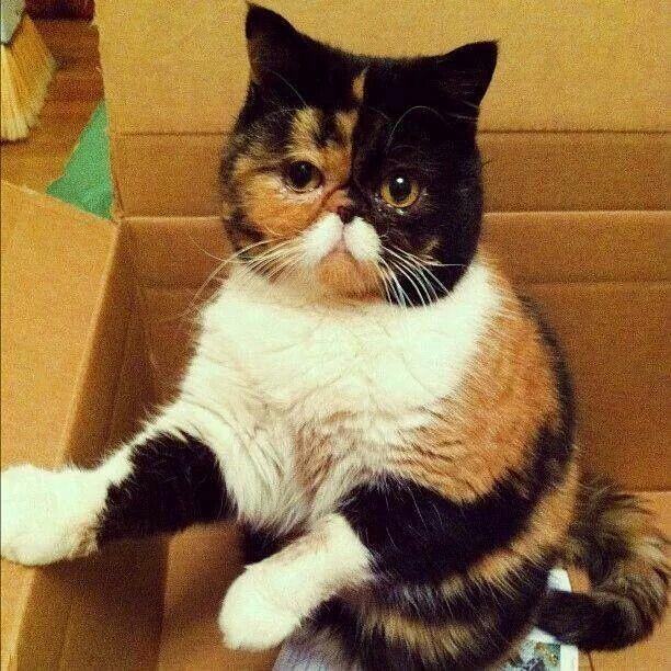 Kat met snor