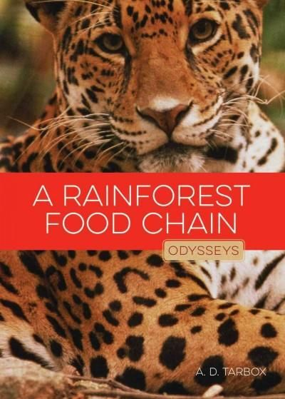A Rainforest Food Chain                                                                                                                                                     More