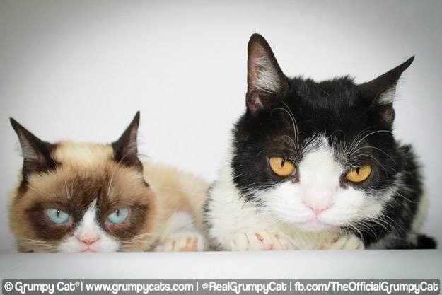 17 best images about pokeygrumpy cats brother on