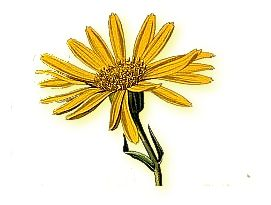 We'd love to read your arnica poems.