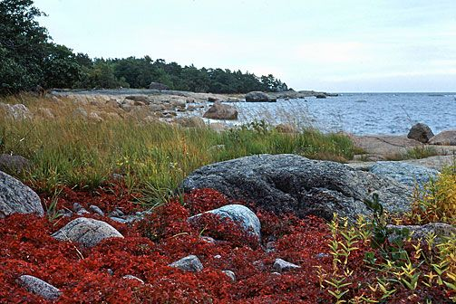 Gulf of Finland National Park. Photo: Jari Kostet