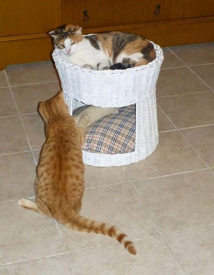 Gerry Creations: Tutorial fotografico cesto per gatti con le cannucce di carta