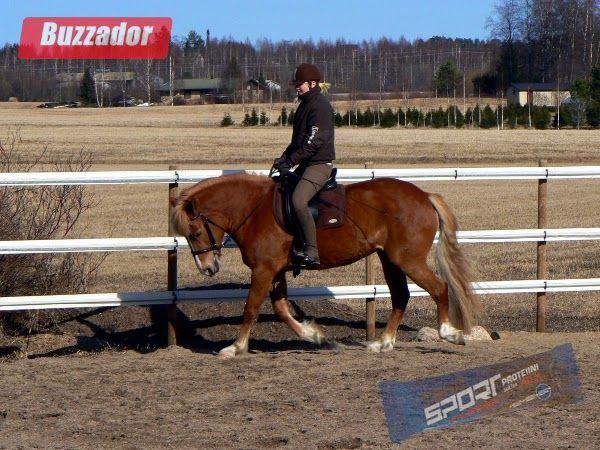 Markanpilkkuja: Hyötyliikuntaa hevosten kanssa