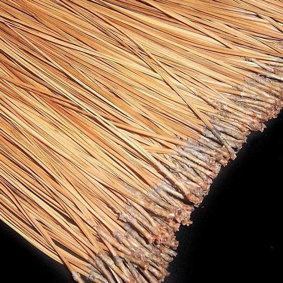 PINE NEEDLES for Basketry or Gourd Crafts  Premium by artgalstudio, $4.99