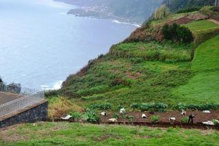 MADEIRA: Hvis du vil opleve Madeiras kulturhistorie, når du er på ferie, skal du blot gå langs en af de 2500 kilometer levadaer et eller andet sted på den smukke ø midt i Atlanterhavet. #ferie #rejser