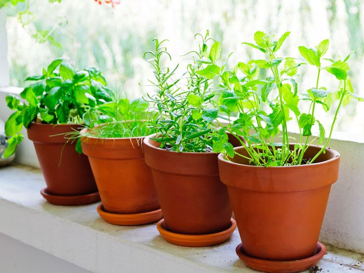 32 besten URBAN GARDENING Bilder auf Pinterest   Balkon, Pflanzen ...