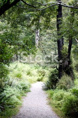 Footpath through lush green soft focus bush Royalty Free Stock Photo