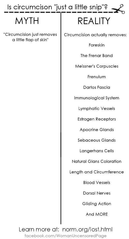 What is lost due to circumcision? Many people think circumcision removes nothing more than a little extra skin. The truth is that circumcision removes several critical components of male sexual anatomy. This list enumerates everything currently known to be lost when one is circumcised.   Learn more at http://www.norm.org/lost.html