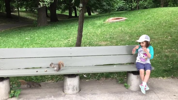 An awesome video of a dad in canada using a squirrel to