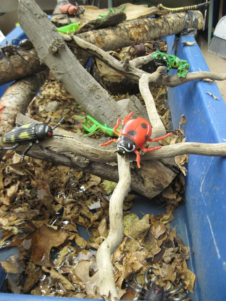 "Minibeasts in the sand tray with leaves, sticks, stones & water ("",)"