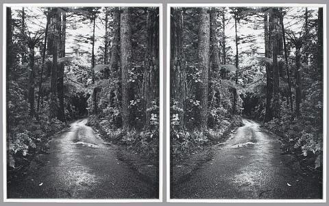 Ann Shelton. Sleeper. Lucy's Gully, South Taranaki, 2004. (mirroring)