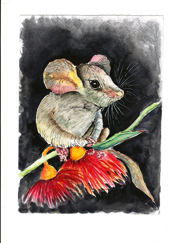 My original watercolour painting listed on Ebay 'Pygmy Possum'                                    Item # 121333322834