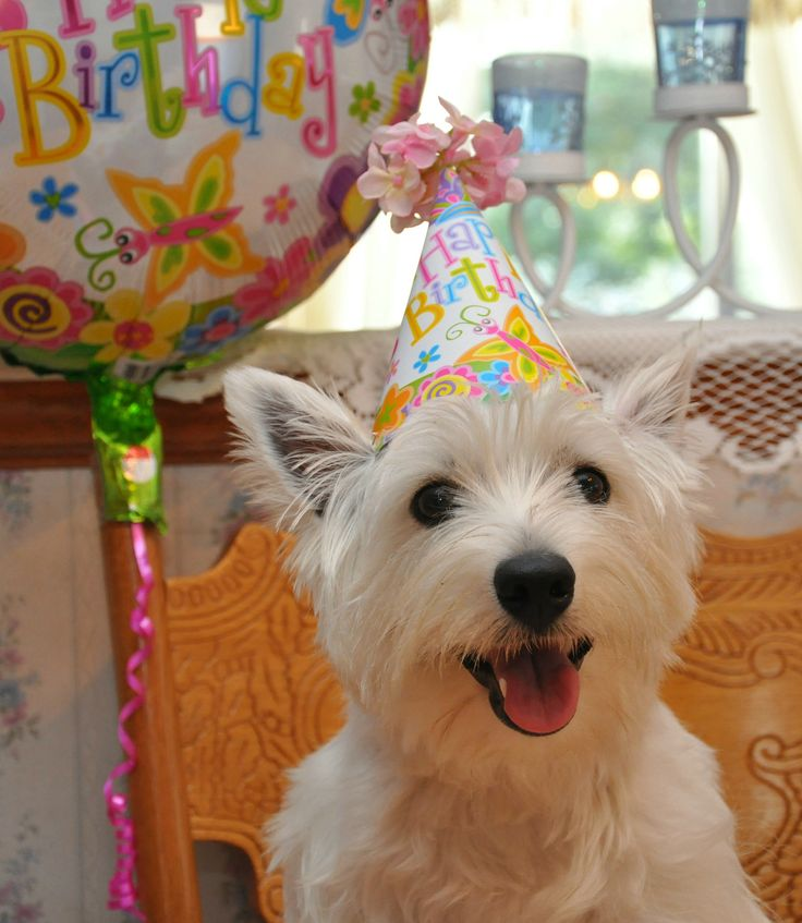 917 Best Birthday Photos Images On Pinterest