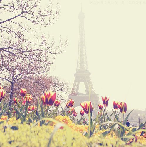 Lovely field of flowers - tower in midst Paris: Tours Eiffel, Favorite Places, Eiffel Towers, Tulip, Paris France, Travel Tips, Spring, Photo, Time In
