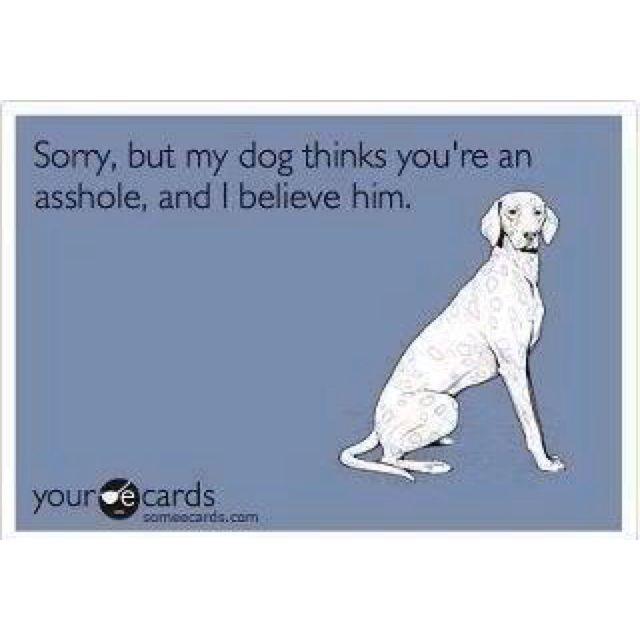 Dogs don't lie.Sugar Bears, Cat, Peanut, Best Friends, Funny Bones, So True, Truths, Dogs People, Bathroom