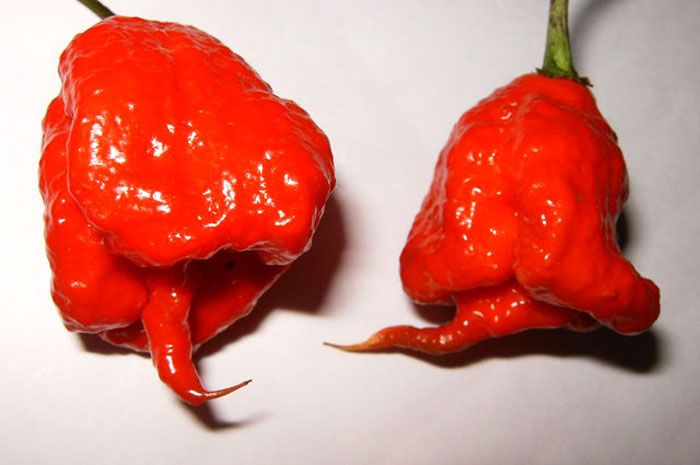 The 11 Spiciest Chile Peppers on Earth