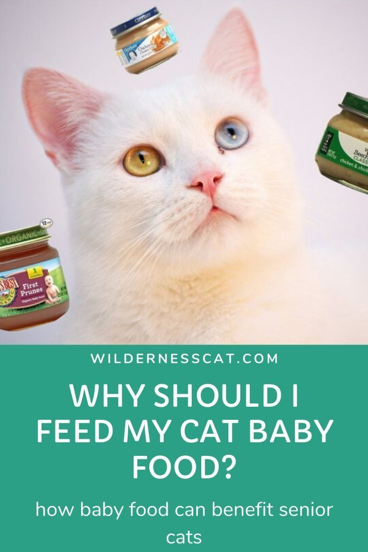 Can Cats Eat Baby Food Best Baby Food For Cats Wildernesscat Baby Food Recipes Cat Food Pureed Food Recipes