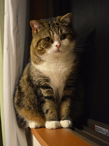 My Favorite Pet Cat