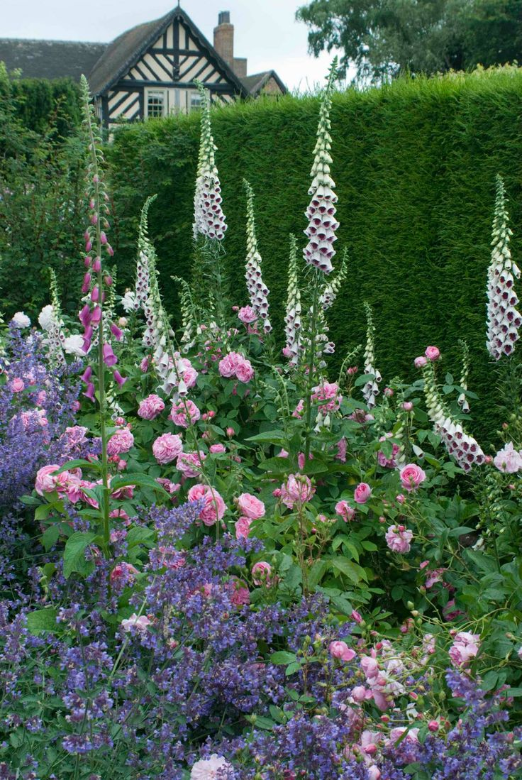 698 Best Images About Cottage Garden On Pinterest