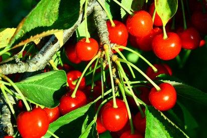 17 best images about plantas venenosas on pinterest crime animais and libros - Plantas ornamentales venenosas ...