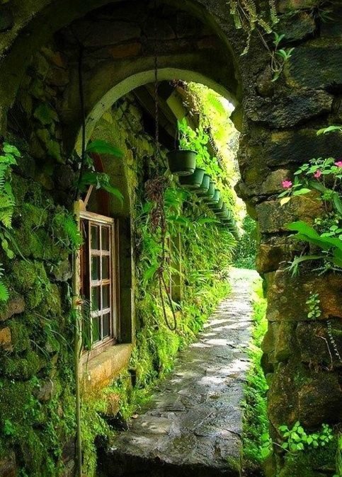 Secret Garden: 391 Best Images About Deep In The Forest On Pinterest
