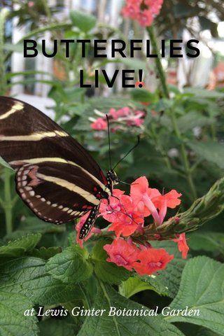 Our first #Steller story: Butterflies LIVE! Enjoy! @stellerstories
