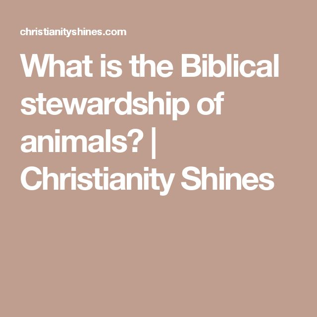 What is the Biblical stewardship of animals? | Christianity Shines