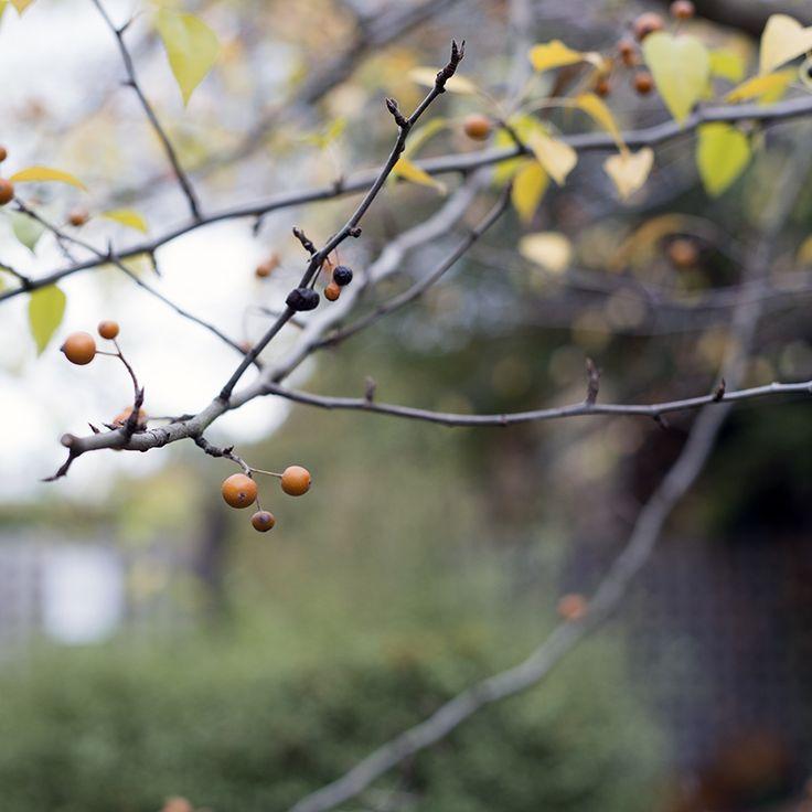 Autumn in Daylesford, Australia. Image by Sonja Rolton