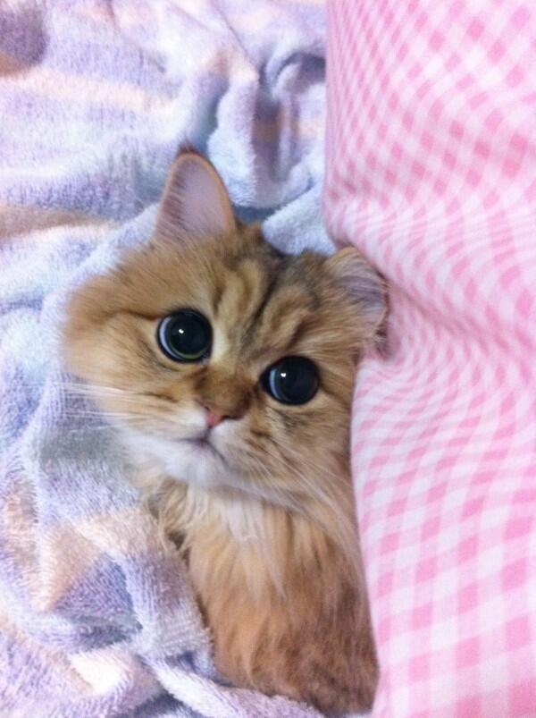 Look at those big eyes!