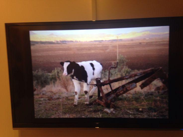 Bediaekiz 2014 , videoart #mamut art Project