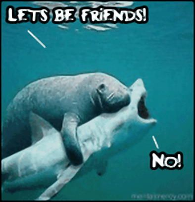 FriendsLaugh, Friends, Funny Pics, Sharks Weeks,  Dugong Dugon, Funny Pictures, Funnypictures, So Funny, Animal