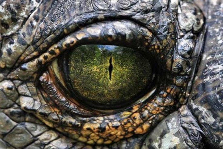 Ojo de cocodrilo. La versatilidad de los colores es lo que más llama la atención.
