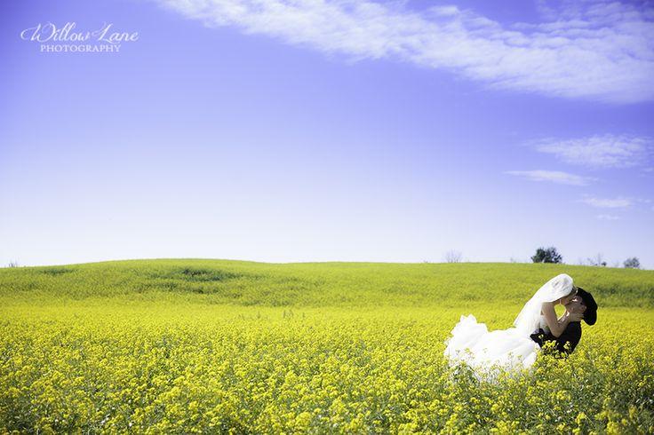 Canola Field Wedding Photos  Barrie  Wedding Photographer | Willow Lane Photography   www.willowlanephotography.ca